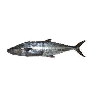 خرید ماهی شیر